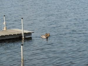 Brendel Lake White Lake MI