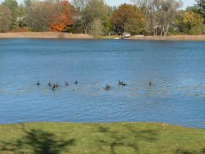 Gilbert Lake Bloomfield MI